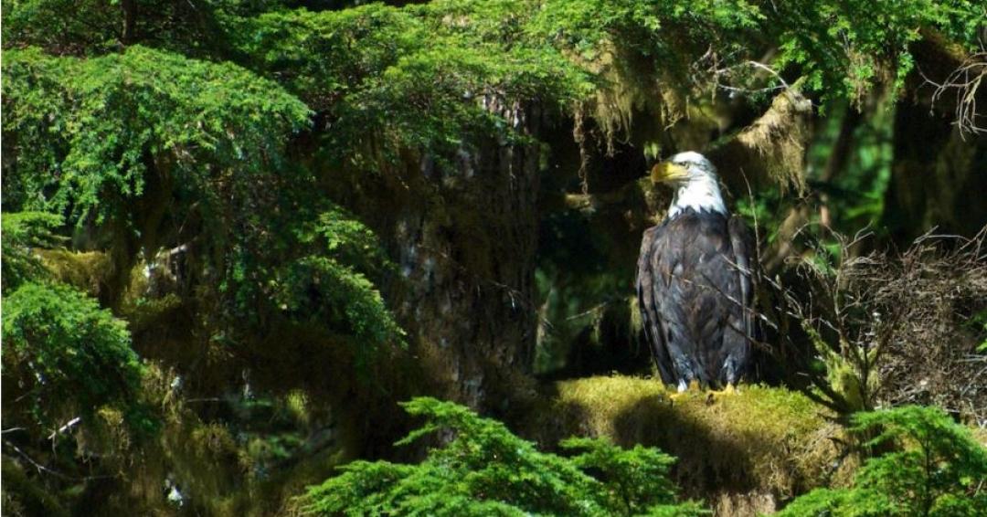 بهترین مکان ها برای ماجراجویی در طبیعت