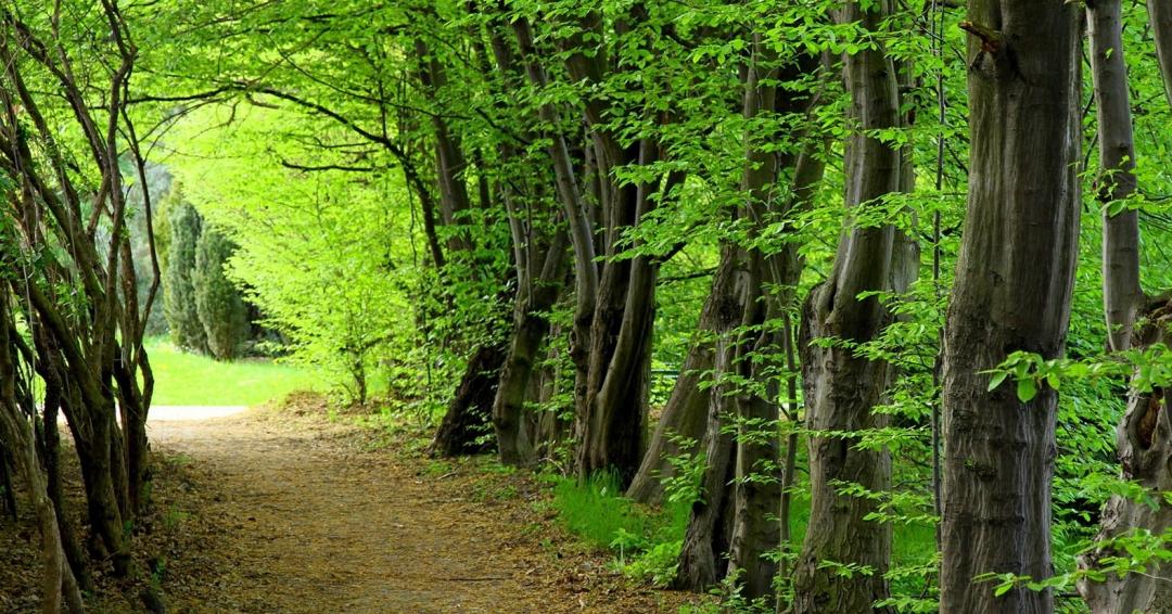 جنگل های زیبای ایران